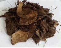 Coconut Shell Natural High Quality