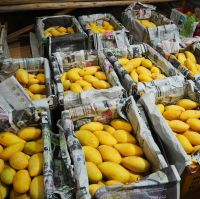 Fresh Farm mangoes