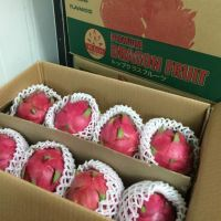 DRAGON FRUITS FOR EXPORT/ BEST QUALITY
