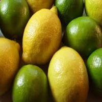 Fresh Citrus Fruits /Yellow Lemon & Green Lime, yellow Eureka fresh lemon for sale