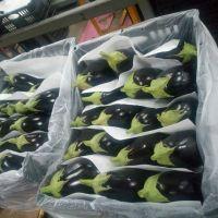 Egypt wholesale price fresh frozen eggplant