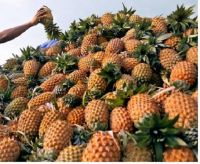 PINEAPPLE FRUITS AVAILABLE FOR SALE