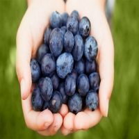 Fresh goji berries, black goji berry, Blueberry, Cranberry, Strawberry, Huckleberry, Medlar, Raspberry, Mulberry,