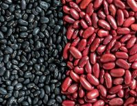 Fresh Quality Kidney Red Beans In SA