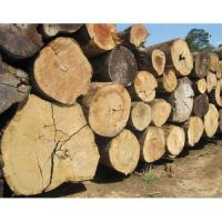 Timber Logs : Raw
