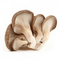 Mushroom Truffle Wild Morchella Conica Boletus Edulis Shiitake