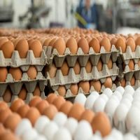 White and Brown Chicken Eggs/Fresh Table Eggs For Sale