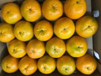 Fresh Oranges (Kinnow/Mandarins) from Pakistan