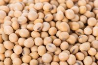 Indian Soybean
