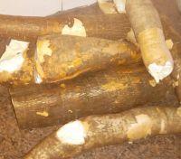 Raw Cassava