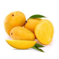 Fresh Alphonso Mangoes Best Price for sale
