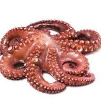 Quality Frozen Octopus For Sale