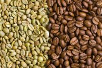 Best Quality Robusta Coffee