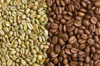 Premium Uganda Robusta Coffee