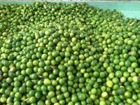 Fresh Seedless Lime (Lemon) 100% Vietnam Origin