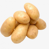 Fresh Potato | Premium Export Quality | China