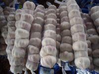 Normal China Garlic   White Garlic