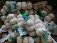 Pure White Garlic | Chinese Fresh Garlic