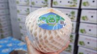 Natural Quality Fresh Young Coconuts from Thailand