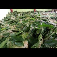 Exporter Kratom Powder Indonesia. WA:  +6281348478167