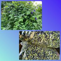 Dried Butterfly Pea Flower - Clitoria Ternatea