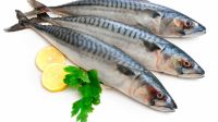 Mackerel Fish, Tuna, Lobster, Sea cucumber