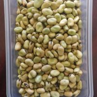 high quality dry Broad Bean fava bean faba bean