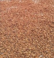 Coffee beans and cocoa beans
