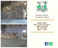Algerian Greasy wool