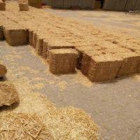 Wheat Hay