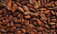 Best selling Cocoa Beans