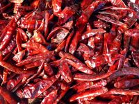 Dried Chili Pepper