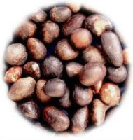 Palm Kernel Nuts