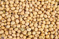 Soya Beans (Nigerian Origin)