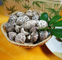Factory Price Dried Shiitake Mushroom Plain Mushroom For Sale