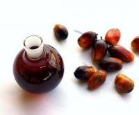 Palm Kernel Oil | Oil Palm Products