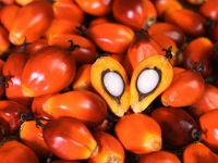 Palm Oil | Oil Palm Products