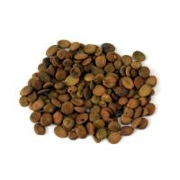 Lebbeck Tree Seed