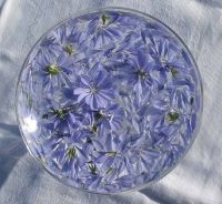 Chicory Oil