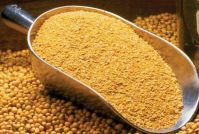 SOYBEAN  MEAL / CAKE