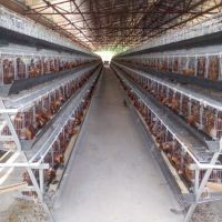 Automatic poultry  farming equipment hen chicken cage