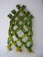 Lucky Bamboo Dracaena