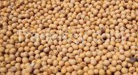 Organic Raw Soybeans