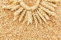 Export of grains, legumes, oilseeds from Russia