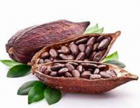 Cocoa Beans wholesale
