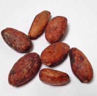 Cocoa Beans wholesale
