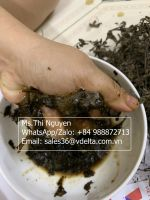 Dried Black Grass Jelly/ Jelly Grass From Lang Son Vietnam