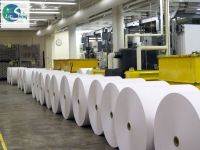 PE coated paper Roll