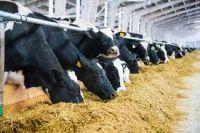 Animal Feed - Soybean
