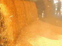 Yellow corn FOB Novorossiysk Russia